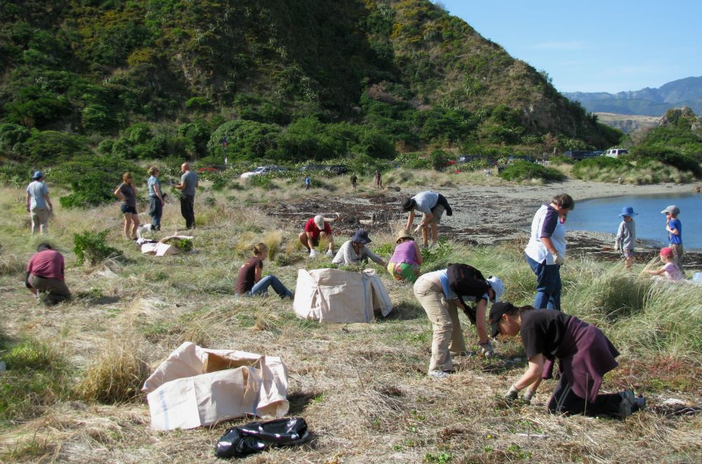 People planting along shore